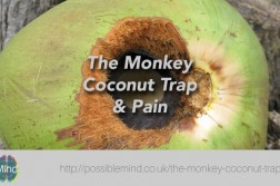 Coconut Trap and Pain
